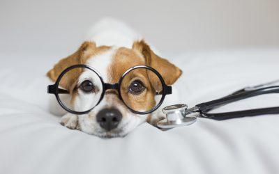 Falsos mitos en veterinaria