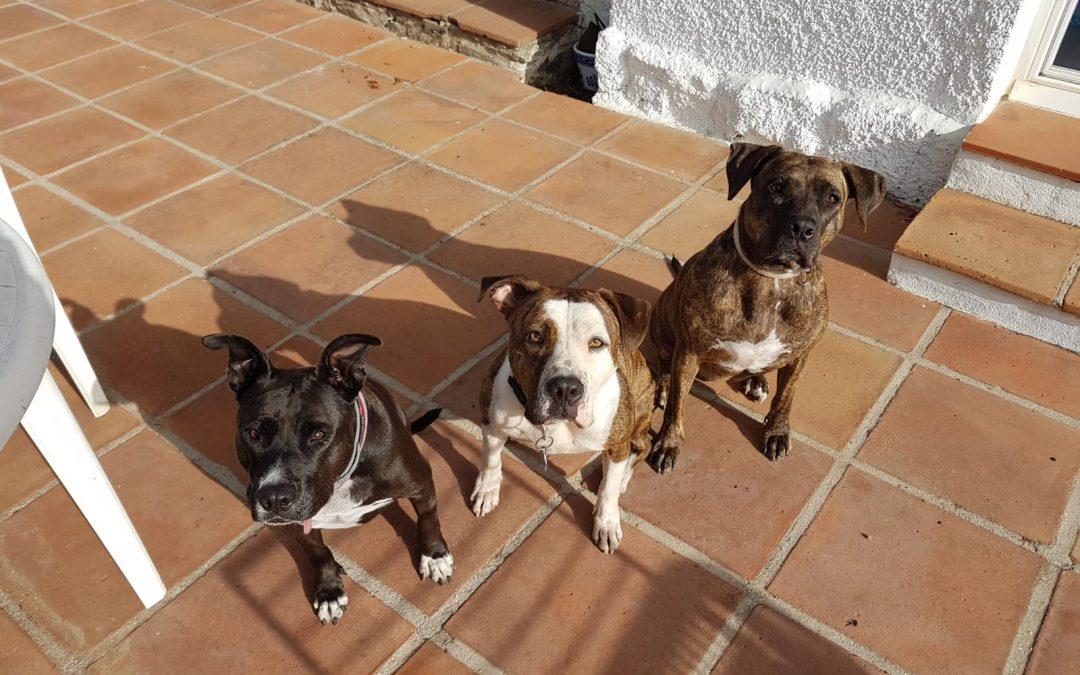 ROXI,TOSCA Y LUCKY