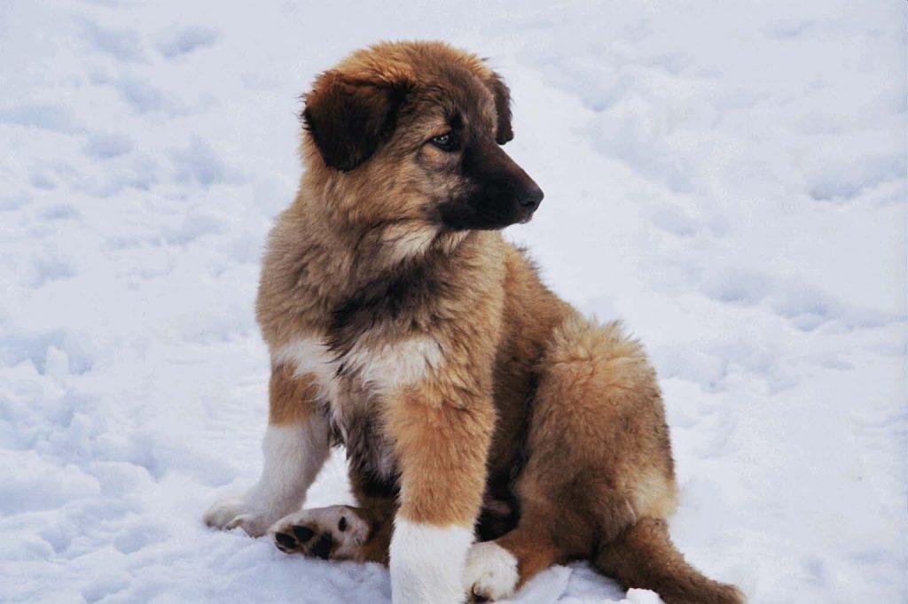 Cachorro de perro | Clínica Veterinaria del Mar