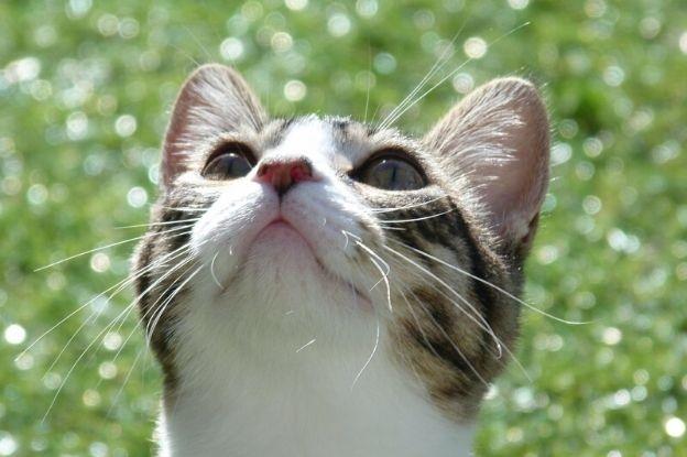 Gatos y Filaria | Clínica del Mar