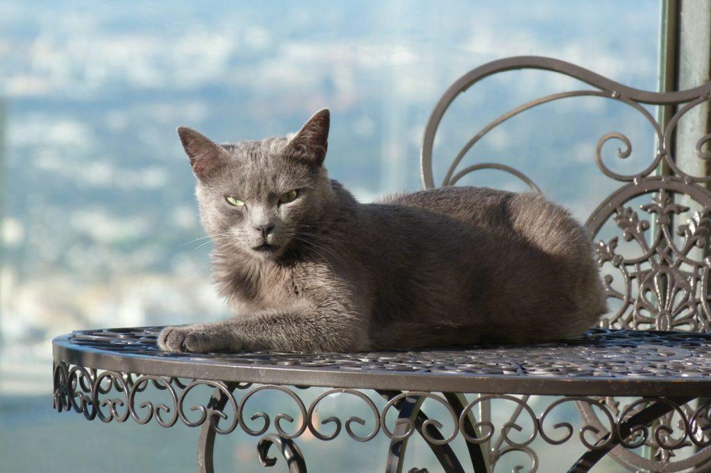 Comportamiento de los gatos | Clínica del Mar