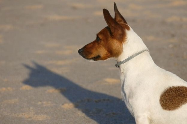 Perros y filaria | Clínica del Mar