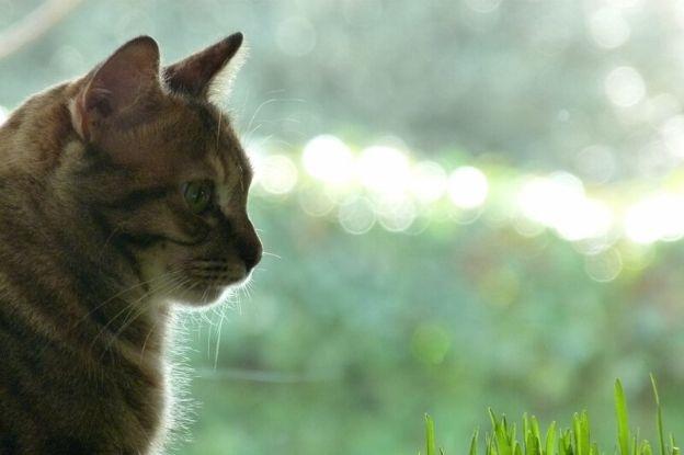 Gatos y Leshmaniosis | Clínica del Mar