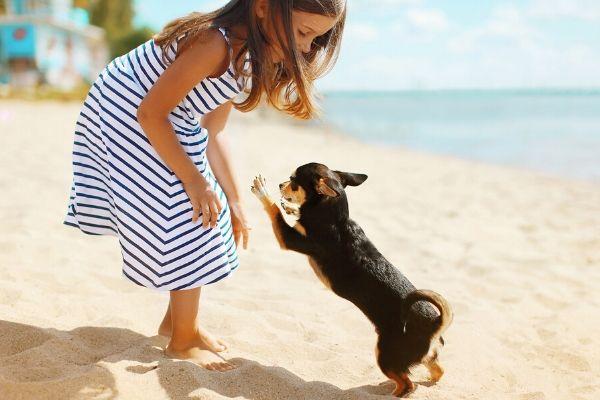 Perros en verano | Clínica Veterinaria del Mar